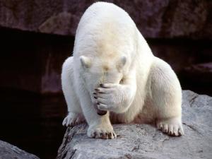 Face palming polar bear